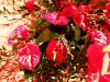 love_songs_fabriano_coro_giovani_fabrianesi_416_02